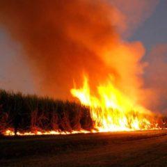 Maďarsko spaluje pole s GMO plodinami