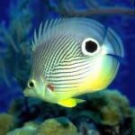 Mořské akvárium – realistický spořič obrazovky